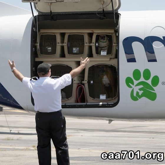 Aircraft images dogs