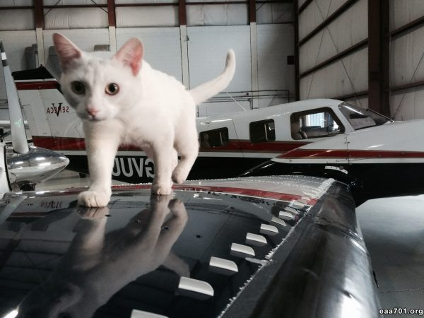 Aircraft images of cats