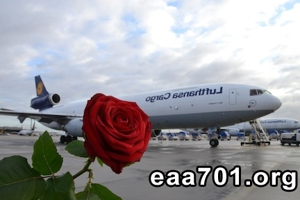 aircraft-images-roses-3