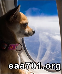 Airplane images dog