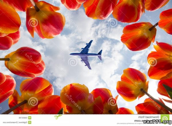 Airplane images of flowers