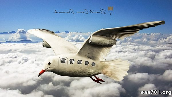 Airplane photo manipulation
