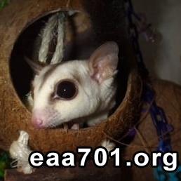Pet glider images