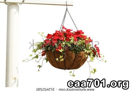 Hang glider photo of flowers